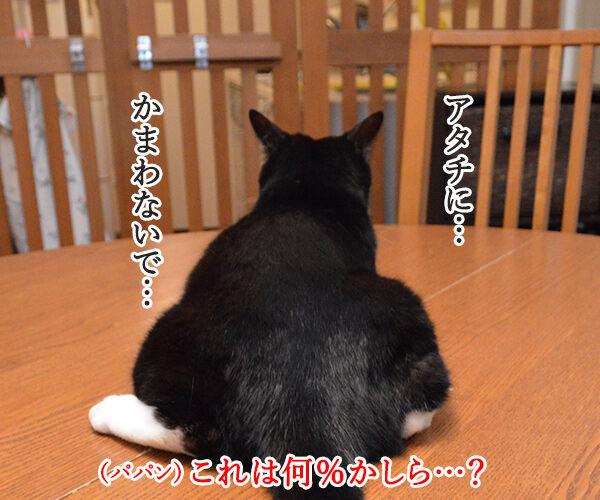 パパンが思う猫さんの「かまわないで」サイン 猫の写真で4コマ漫画 3コマ目ッ