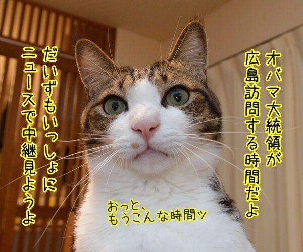 オバマ大統領が広島訪問ですってッ 猫の写真で4コマ漫画 1コマ目ッ