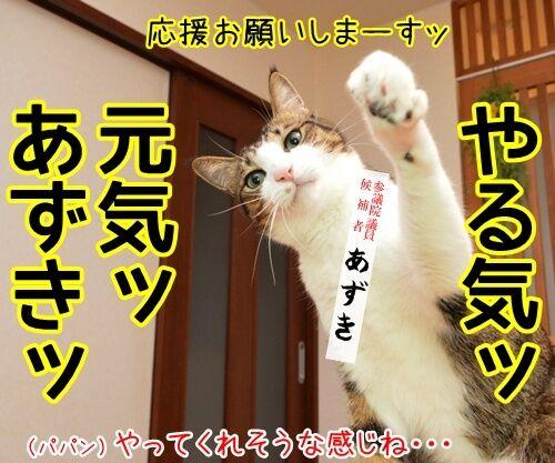 あずだいは参院選に立候補しますッ 猫の写真で4コマ漫画 2コマ目ッ