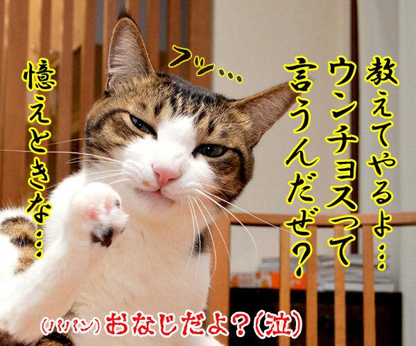 ちゃんと砂かけてよね 猫の写真で4コマ漫画 4コマ目ッ