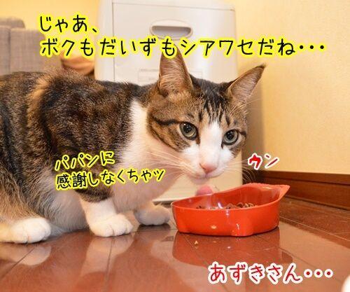 感謝のキモチ 猫の写真で4コマ漫画 3コマ目ッ