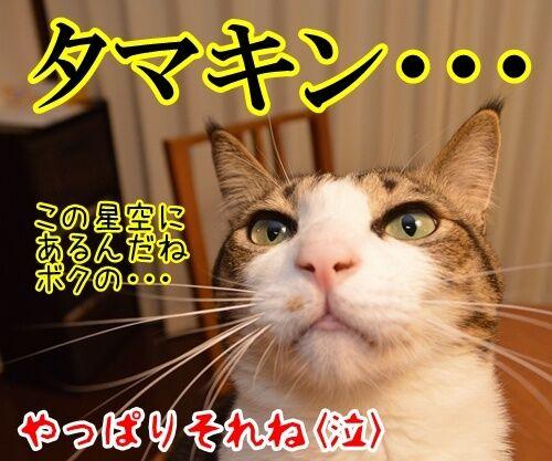 天体観測 其の二 猫の写真で4コマ漫画 4コマ目ッ