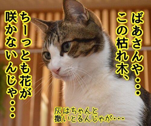 にほん昔話「花さかじいさん」 猫の写真で4コマ漫画 3コマ目ッ
