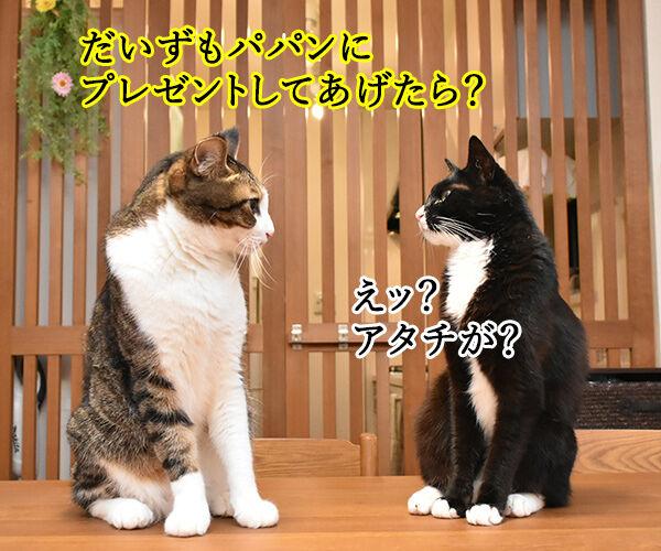 8月2日は何の日かしら? 猫の写真で4コマ漫画 2コマ目ッ