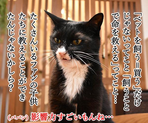 あのヒトが猫を飼い始めたんですってッ 猫の写真で4コマ漫画 3コマ目ッ