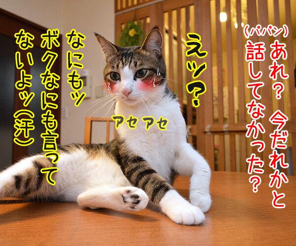 流し目王子 早乙女あずき 猫の写真で4コマ漫画 4コマ目ッ