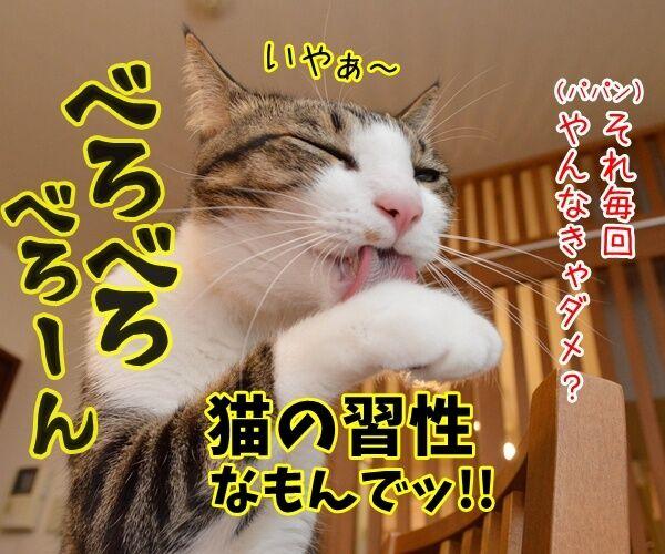 猫の握手会 猫の写真で4コマ漫画 4コマ目ッ