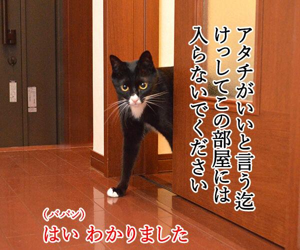だいずの恩返し 猫の写真で4コマ漫画 2コマ目ッ