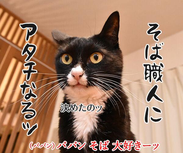 そば職人にアタチなるッ 猫の写真で4コマ漫画 1コマ目ッ