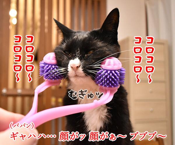 『全身マッサー術 にゃんこの癒し』で癒しちゃうわよッ 猫の写真で4コマ漫画 3コマ目ッ