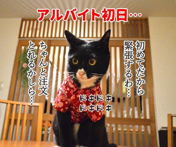 アルバイト初日(だいず篇) 其の一 猫の写真で4コマ漫画 1コマ目ッ