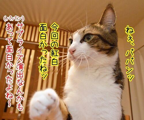 第66回NHK紅白歌合戦は紅組が勝利 猫の写真で4コマ漫画 1コマ目ッ