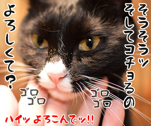 ほらッほらッ 猫の写真で4コマ漫画 4コマ目ッ
