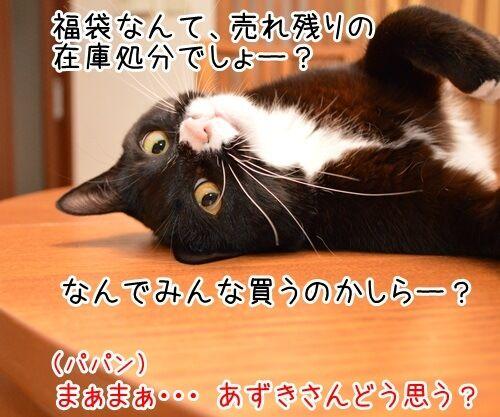 お正月といえば福袋 猫の写真で4コマ漫画 2コマ目ッ