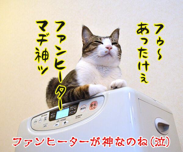 私は神…… 猫の写真で4コマ漫画 4コマ目ッ