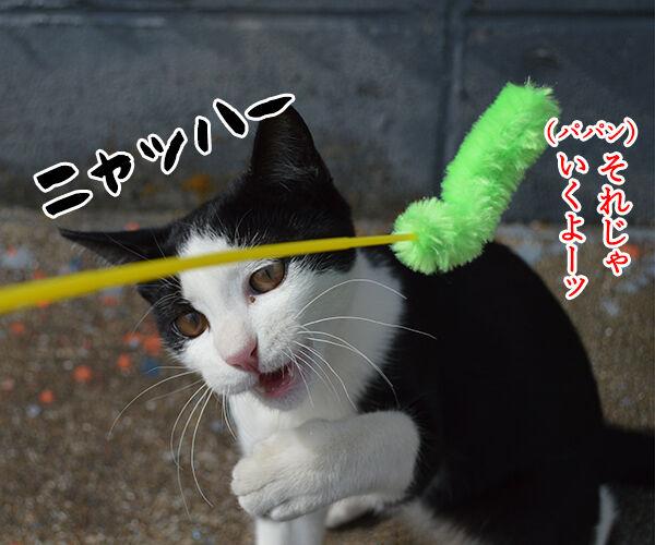 猫島 其の六 猫の写真で4コマ漫画 2コマ目ッ