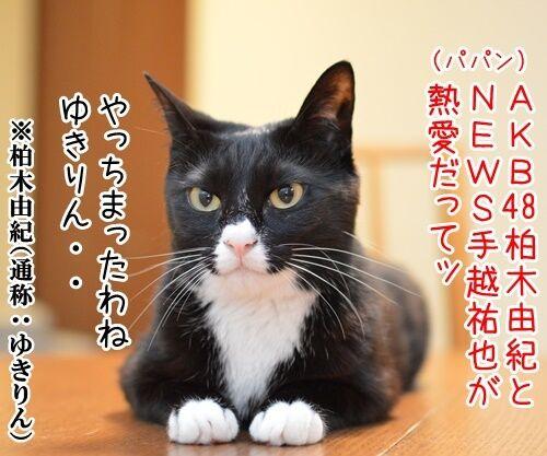 AKB柏○とNEWS手○の熱愛報道 猫の写真で4コマ漫画 1コマ目ッ
