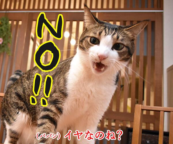 ひさしぶりにおフロに入りましょうか? 猫の写真で4コマ漫画 3コマ目ッ