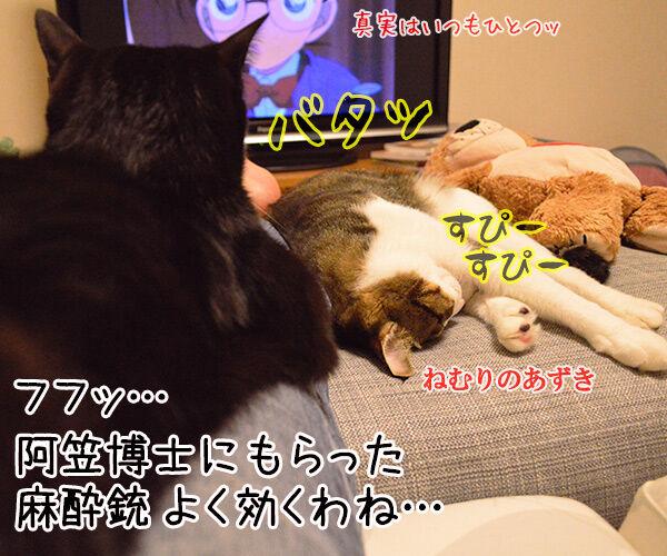 見えないのよッ 猫の写真で4コマ漫画 4コマ目ッ
