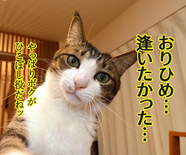 七夕 織姫と彦星が年に一度会える日 猫の写真で4コマ漫画 2コマ目ッ