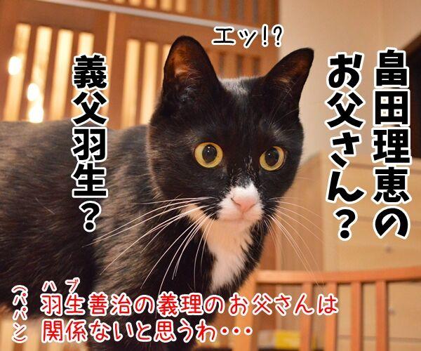 パパン、ギフハブに…… 猫の写真で4コマ漫画 2コマ目ッ