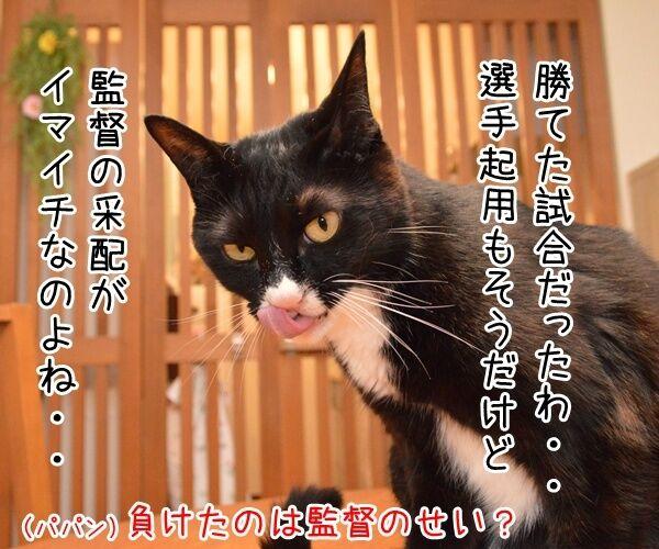 サッカー日本代表は引き分けだったのッ 猫の写真で4コマ漫画 2コマ目ッ
