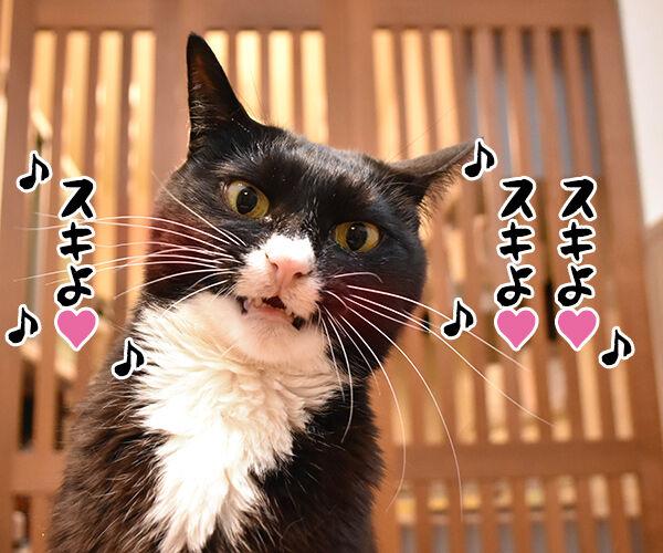 『うる星やつら』の高橋留美子先生が紫綬褒章だから唄うのよッ 猫の写真で4コマ漫画 3コマ目ッ