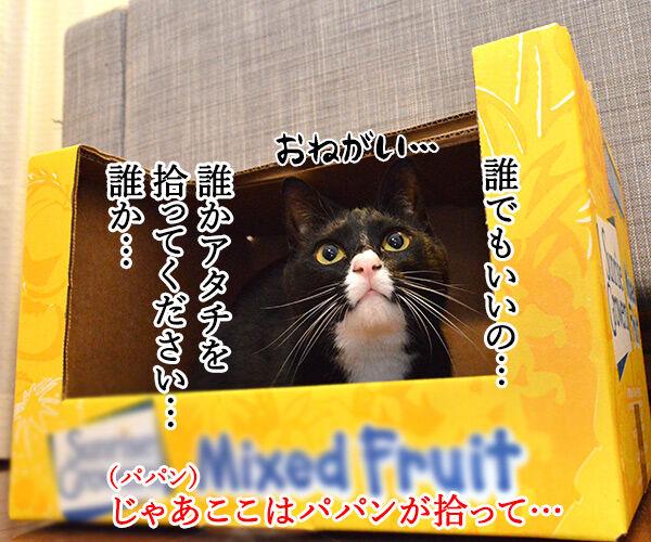 捨て猫物語 猫の写真で4コマ漫画 3コマ目ッ