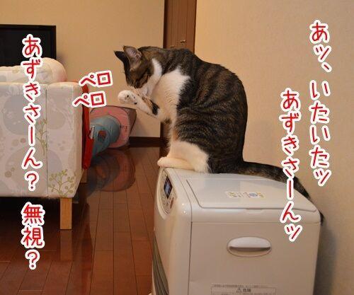 あずきさんを呼ぶとき 猫の写真で4コマ漫画 2コマ目ッ