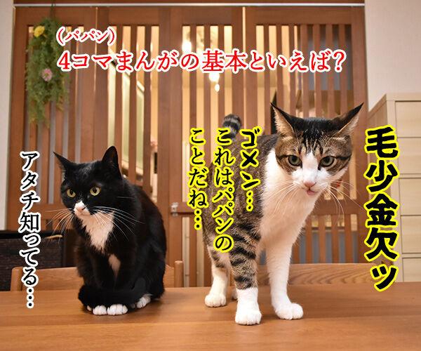 4コマまんがの基本といえば? 猫の写真で4コマ漫画 1コマ目ッ