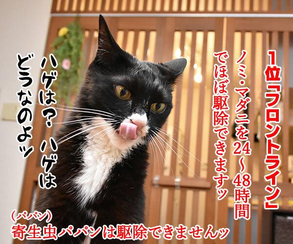 使っている寄生虫駆除剤ランキング 猫の写真で4コマ漫画 2コマ目ッ