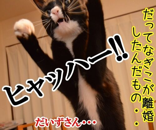 ハイテンションなアタチ 猫の写真で4コマ漫画 4コマ目ッ