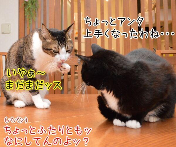 寒くなってきたからアレしなくちゃねッ 猫の写真で4コマ漫画 3コマ目ッ