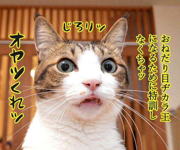 猫目ヂカラ王にッ おれはなるッ 猫の写真で4コマ漫画 1コマ目ッ