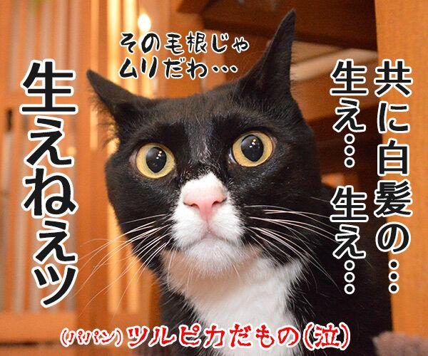 ねことじいちゃん 猫の写真で4コマ漫画 4コマ目ッ