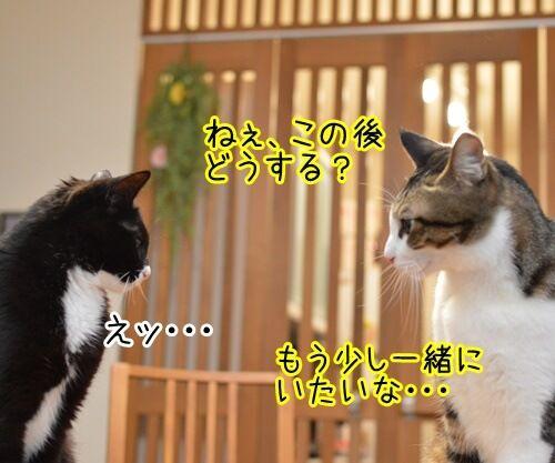 この後… どうする…? 猫の写真で4コマ漫画 1コマ目ッ