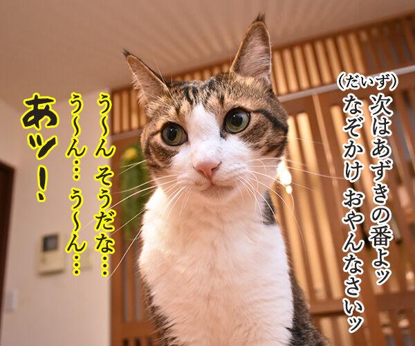 なぞかけやってみなさいよッ 猫の写真で4コマ漫画 3コマ目ッ