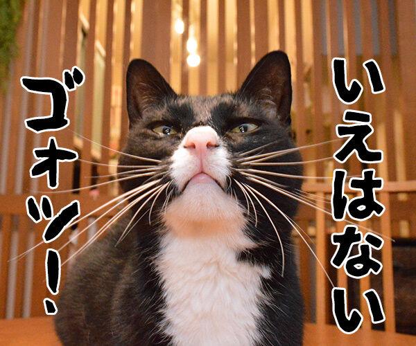 家売るオンナ 私に売れない家はないッ!! 猫の写真で4コマ漫画 3コマ目ッ