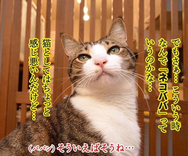 小学校教諭がガソリンスタンドで5000円をネコババですってッ 猫の写真で4コマ漫画 2コマ目ッ
