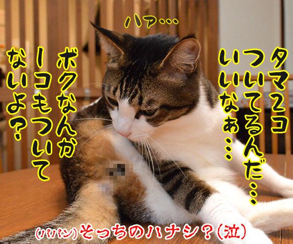 最近ついてないのよね… 猫の写真で4コマ漫画 4コマ目ッ
