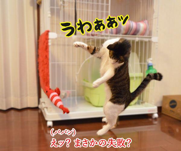 エビキャッチ 其の四 猫の写真で4コマ漫画 3コマ目ッ