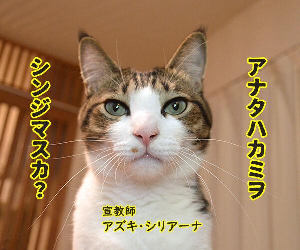 アナタハシンジマスカ? 猫の写真で4コマ漫画 1コマ目ッ