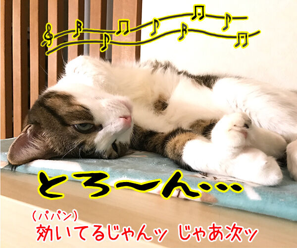 『ねこのための音楽~Music for Cats~』を聴かせてみたのッ 猫の写真で4コマ漫画 2コマ目ッ