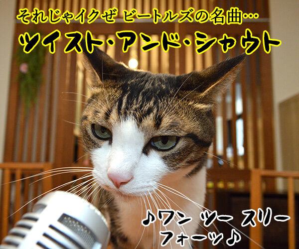 今日はロックの日だからシェケナベイベー 猫の写真で4コマ漫画 2コマ目ッ
