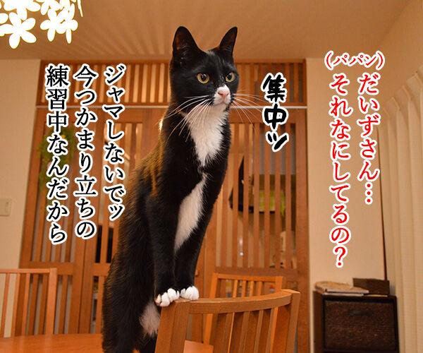 練習中なのよッ 猫の写真で4コマ漫画 1コマ目ッ