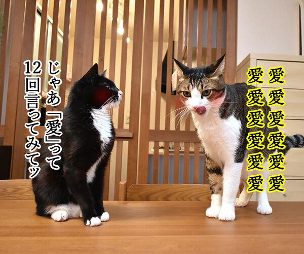 「好き」って10回言ってみてッ 其の二 猫の写真で4コマ漫画 3コマ目ッ