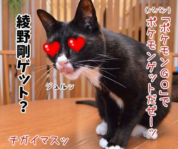 「ポケモンGO」でポケモンゲットだぜーッ 猫の写真で4コマ漫画 1コマ目ッ