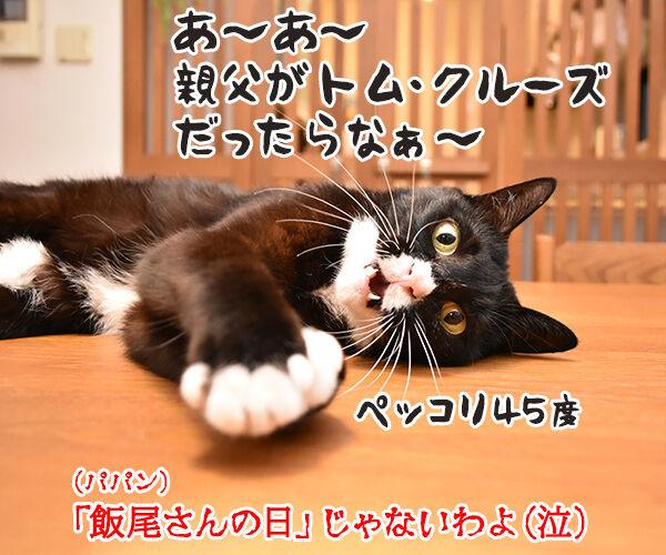 11月3日は「文化の日」で「いいお産の日」なのよッ 猫の写真で4コマ漫画 4コマ目ッ