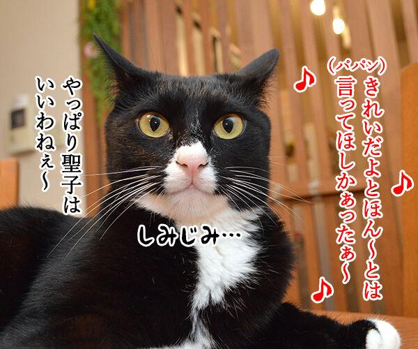 夏の扉 猫の写真で4コマ漫画 2コマ目ッ