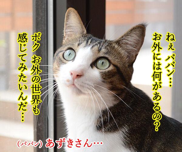 おそとには 猫の写真で4コマ漫画 3コマ目ッ